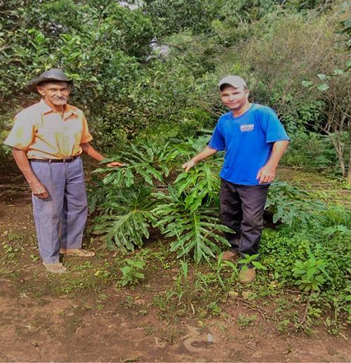 Senhor Marcos e seu filho Alexandre na propriedade da família. Entre eles Cipó- imbé usado na produção de insumos ecológicos. Fonte: Scarabeli, 2018.